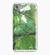 Rare python snake found in the Borneo Rainforest, Malaysia iPhone Case/Skin