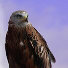 Falcon by Andy Harris