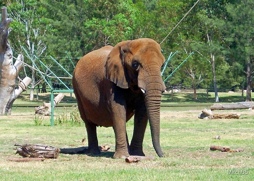 Elephant by Mitch85