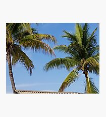 Blue Sky Island Palms Photographic Print