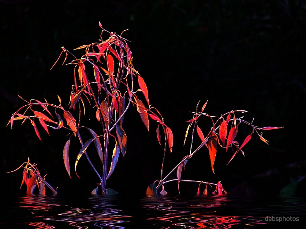 """""""Red Highlights"""" by debsphotos"""