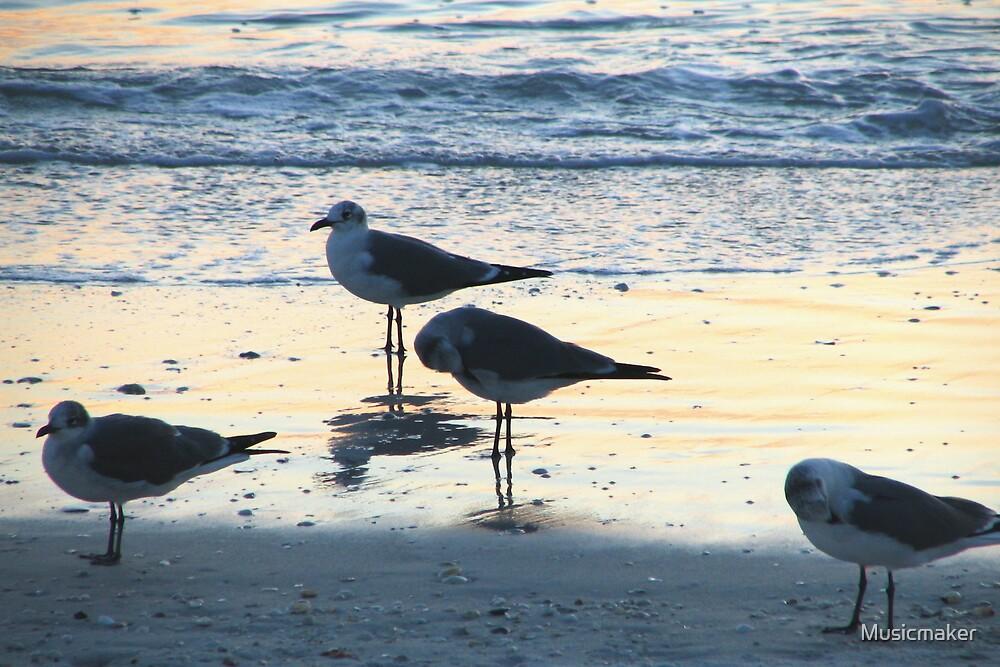 sea gulls by Musicmaker