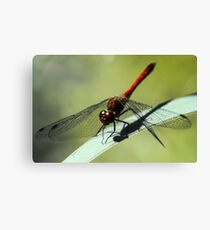 Red Dragonfly Canvas Print