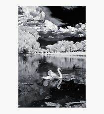 Cemetery Swan Photographic Print