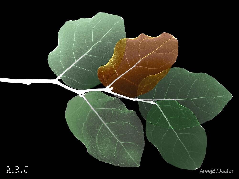 leaf by Areej27Jaafar