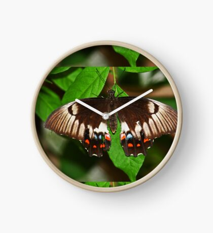 Schmetterling Uhr