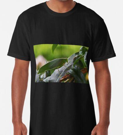 Gum Leaf Katydid (Torbia viridissima) Longshirt
