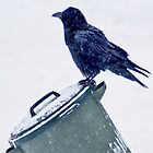 Raven On Garbage Can in snow storm by Yukondick