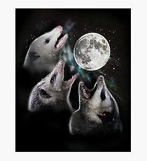 3 Opossum Mond Fotodruck