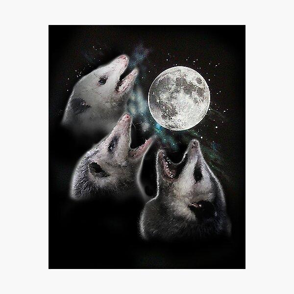 3 Opossum Moon Photographic Print