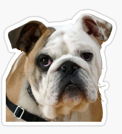 American Bulldog With Sad Eyes Vector Sticker