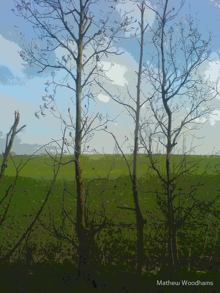 Through the Trees by Mathew Woodhams
