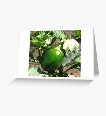 Baby Red Bell Pepper Greeting Card