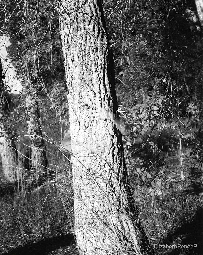 Tree Hugger by ElizabethReneeP