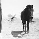 Desert Pasture by ElizabethReneeP