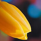 The Beautiful Yellow Tulip by Sherry Hallemeier