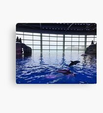 Playful dolphins Canvas Print