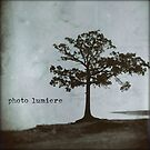 PL Tree by photo-lumiere