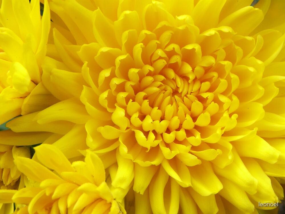 full yellow  by leonoel