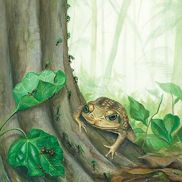 Toad Eats Ants by squashbug