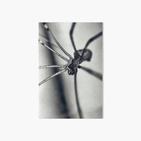 Portrait of a spider Art Board Print
