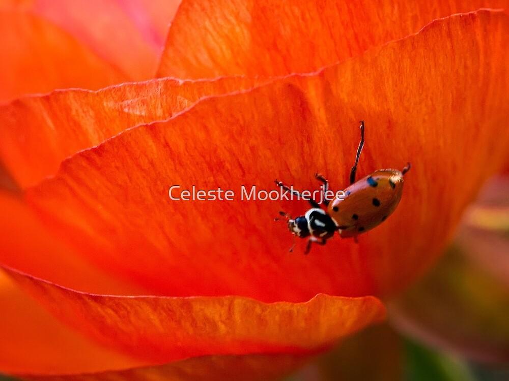Es ist eine Marienkäferwelt von Celeste Mookherjee