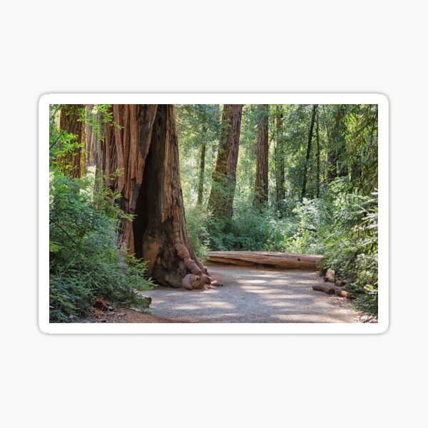 Big Basin Redwoods State Park Sticker