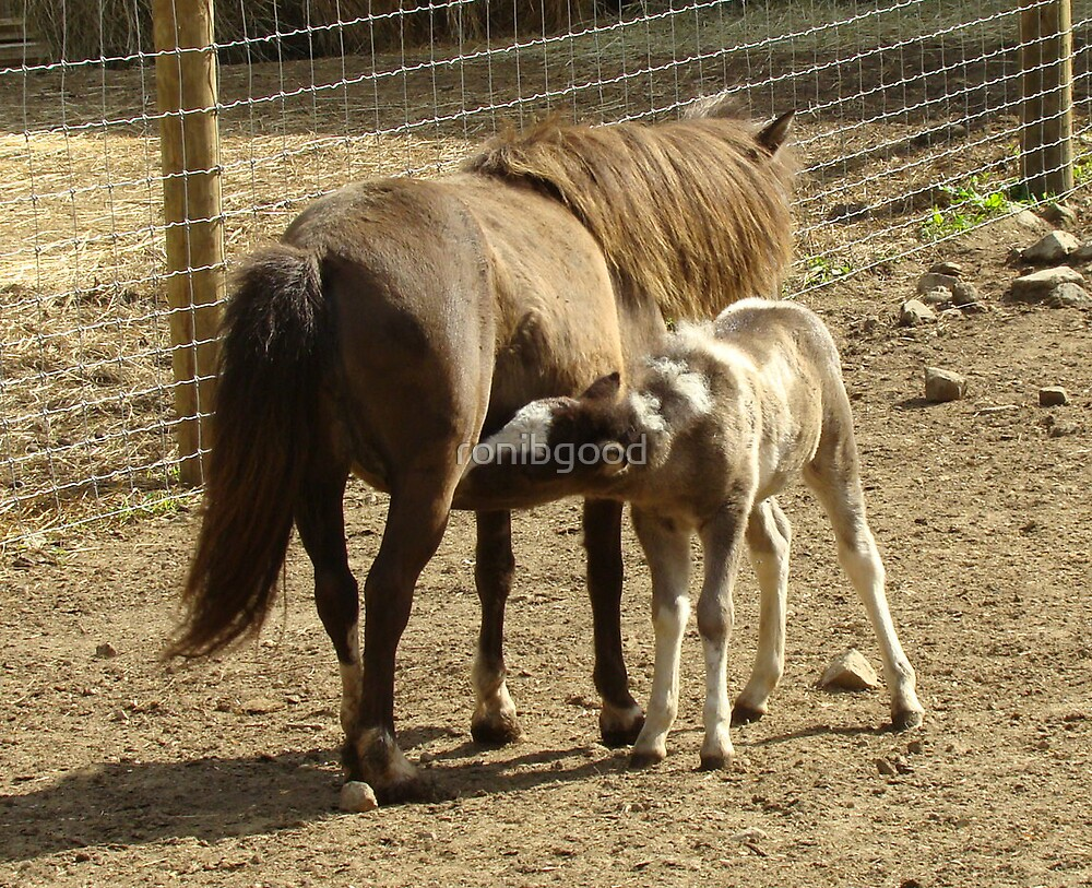 Mother and Son Ponies by ronibgood
