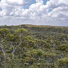 Lesueur National Park by garts