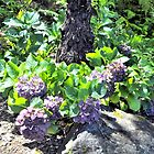 Sunlit Hydrangea by Margaret Stevens