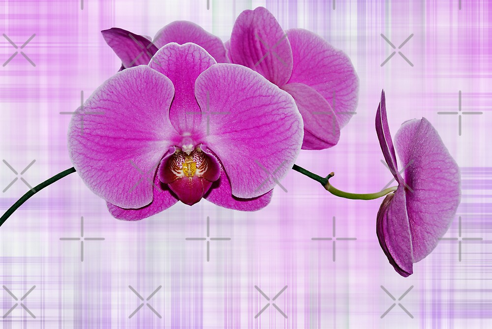 Petals On Plaid by Maria Dryfhout