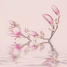 Soft Pink Magnolia Flowers And Water Reflection by artsandsoul
