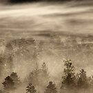 27.7.2017: Misty Forest by Petri Volanen