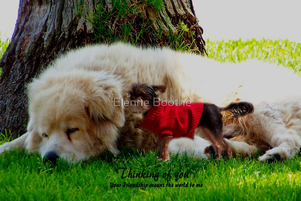Friendship by Elenne Boothe