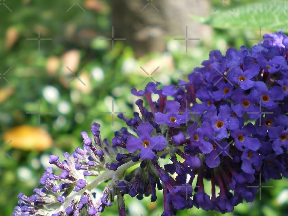 Violet Blue by Rebekah  McLeod