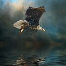 Bald Eagle Fishing by Brian Tarr