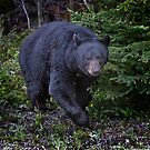 So, You've Never Seen A Bear Naked In The Woods? by Alex Preiss