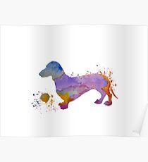 Dog Art - Dachshund Poster