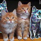 scary cats :P by Areej27Jaafar
