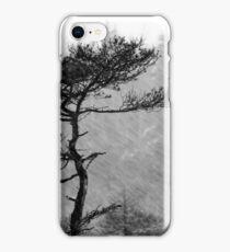 8.1.2015: Pine Tree, Snowfall IV iPhone Case/Skin