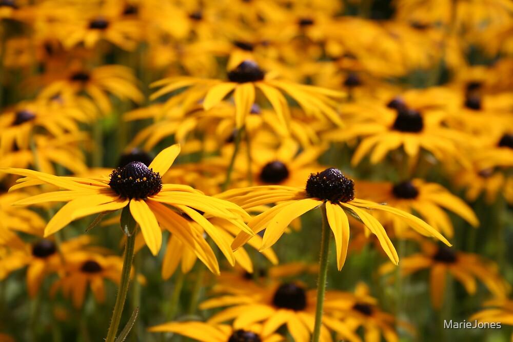 Sun kissed yellow by MarieJones