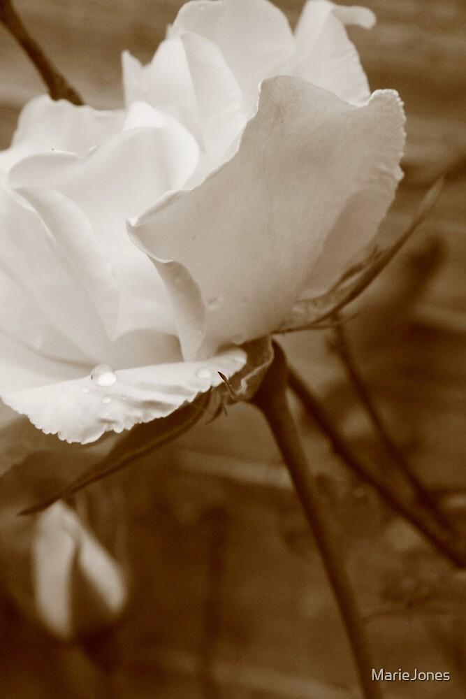 English Rose by MarieJones