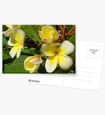White Frangipani Postcards