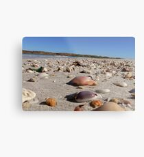 Scattered Shells Metal Print