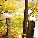 Autumn 12 by Dominika Aniola
