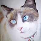 Lucha The Cat. by Siamesecat