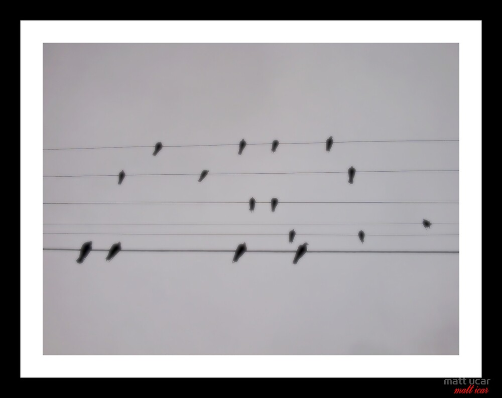 can you see the music? by matt ucar