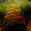 Raindrops on Rainbow Feathers by theleastone