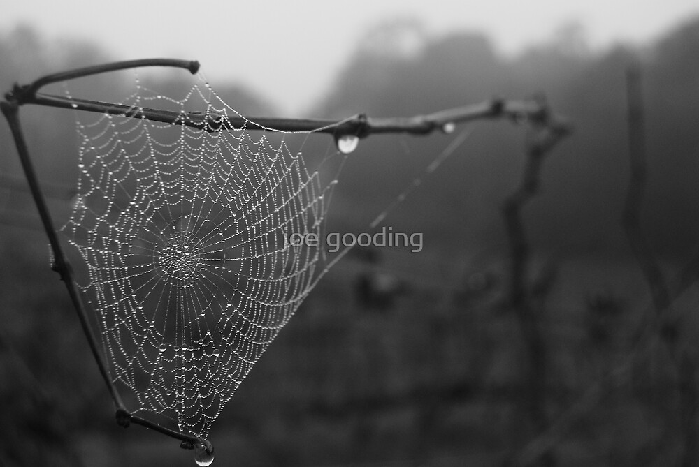 wet web by joe gooding