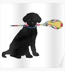 Póster Black Lab Retriever Lacrosse Dog